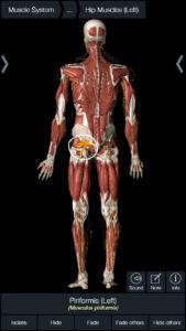 坐骨神経痛|カイロプラクティック